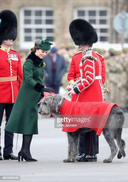 Catherine Duchess of Cambridge attaches a sprig of shamrock to the regimental mascot the Irish wolfhound 'Donal' during the annual Irish Guards St...