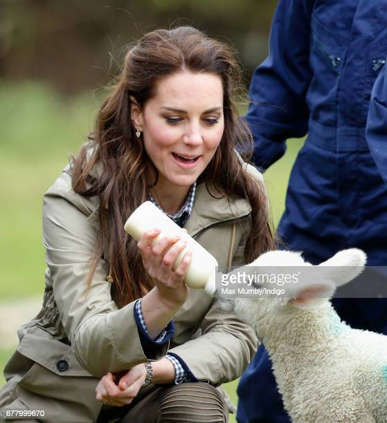Catherine Duchess of Cambridge bottle feeds 'Stinky' the lamb as she visits Farms for City Children on May 3 2017 in Arlingham England Farms for City...