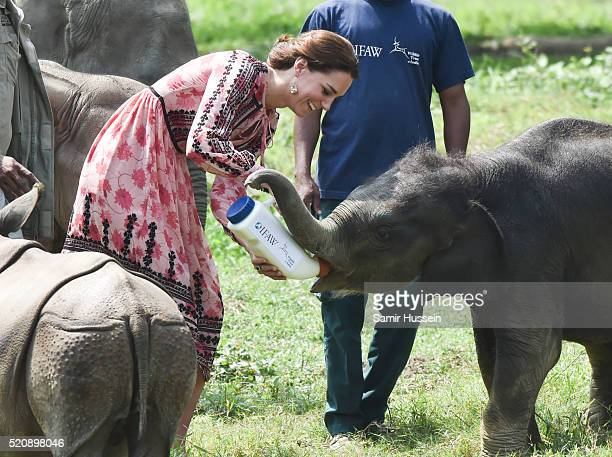Catherine, Duchess of Cambridge feeds a baby elephant during a visit to the Centre for Wildlife Rehabilitation and Conservation at Kaziranga National...