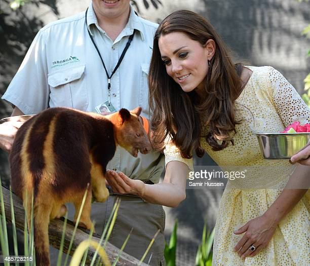 Catherine Duchess of Cambridge feeds a tree kangaroo as they isit the Bilby Enclosure at Taronga Zoo on April 20 2014 in Sydney Australia The Duke...