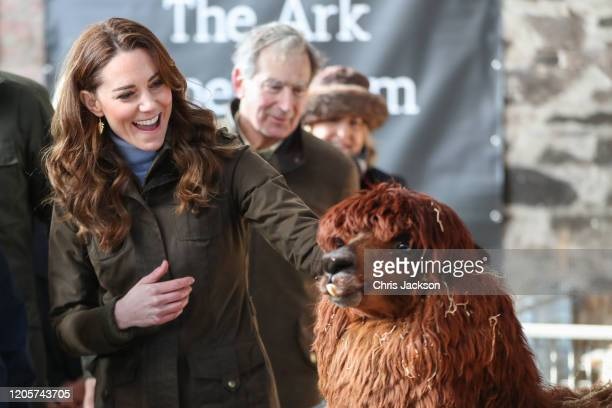 Catherine, Duchess of Cambridge has an encounter with an Alpaca during a visit to The Ark Open Farm on February 12, 2020 in Newtownards, Northern...