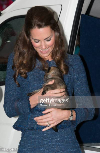 Catherine Duchess of Cambridge holds a puppy during a visit to the Royal New Zealand Police College on April 16 2014 in Wellington New Zealand The...