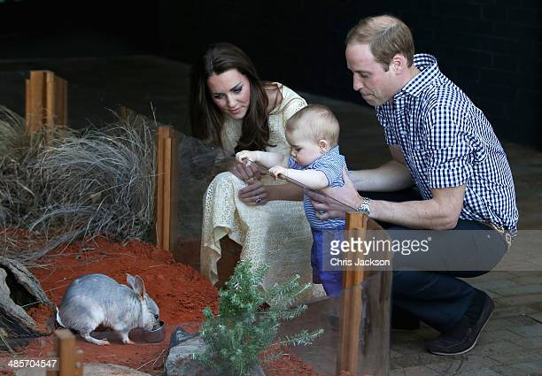 Catherine, Duchess of Cambridge holds Prince George of Cambridge as Prince William, Duke of Cambridge look whilst meeting a Bilby called George at...
