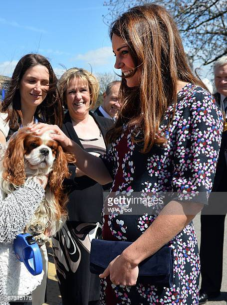 Catherine Duchess of Cambridge meets the school dog Henry as she arrives to visit The Willows Primary School Wythenshawe to launch a new school...