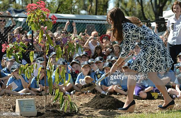 Catherine Duchess of Cambridge plants a Summer Red Eucalyptus tree at Winmalee Guide Hall in Yellow Rock during the eleventh day of their official...