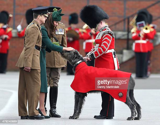 Catherine, Duchess of Cambridge presents a 'Shamrock' to Regimental Mascot Domhnall during the St Patrick's Day parade at Mons Barracks on March 17,...