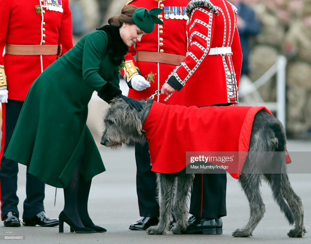 Catherine, Duchess of Cambridge presents a sprig of shamrock to Irish Wolfhound 'Domhnall' (mascot of the Irish Guards) during the annual Irish Guards St Patrick's Day Parade at Cavalry Barracks on March 17, 2018 in Hounslow, England.