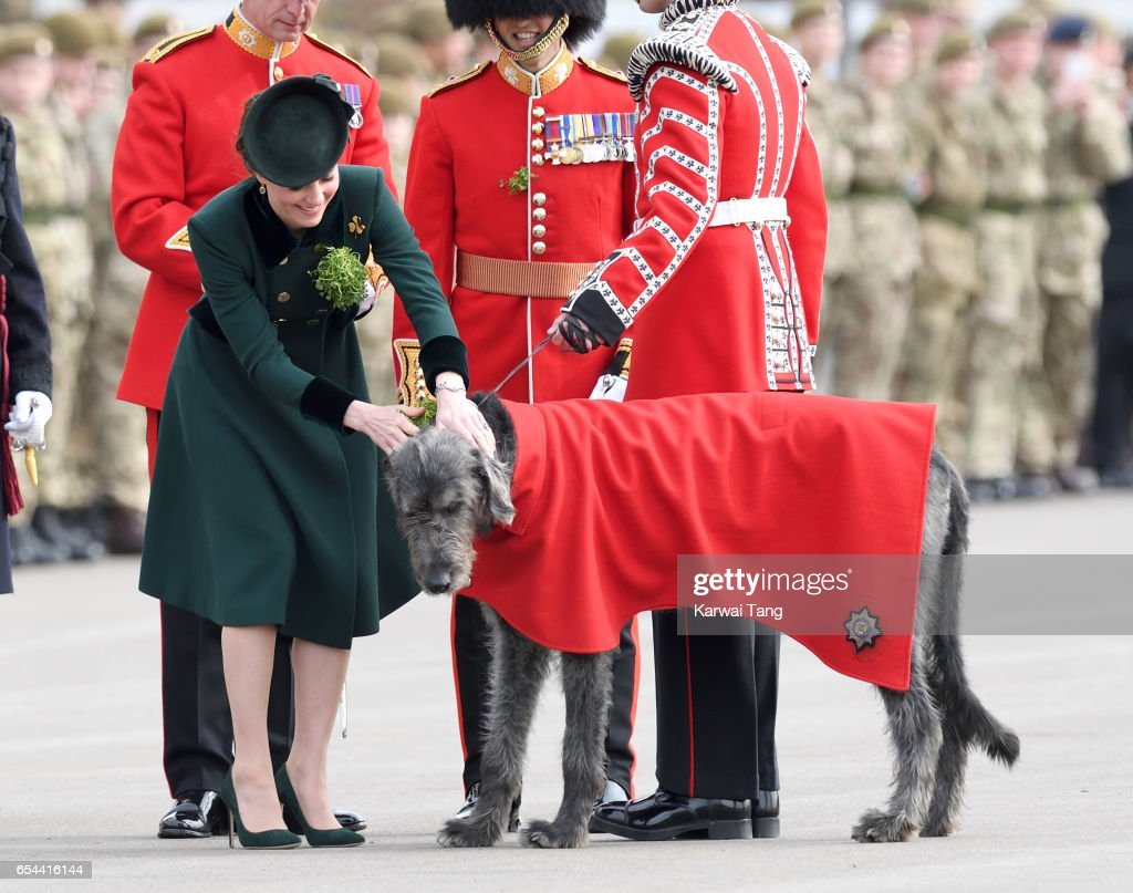 Catherine, Duchess of Cambridge presents Domnhall the Band of the Irish Guards Wolfhound Mascot with sprigs of shamrock during the annual Irish Guards St Patrick's Day Parade at Household Cavalry Barracks on March 17, 2017 in London, England.