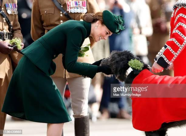 Catherine Duchess of Cambridge presents Irish Wolfhound 'Domhnall' regimental mascot of the Irish Guards with a sprig of shamrock during the St...