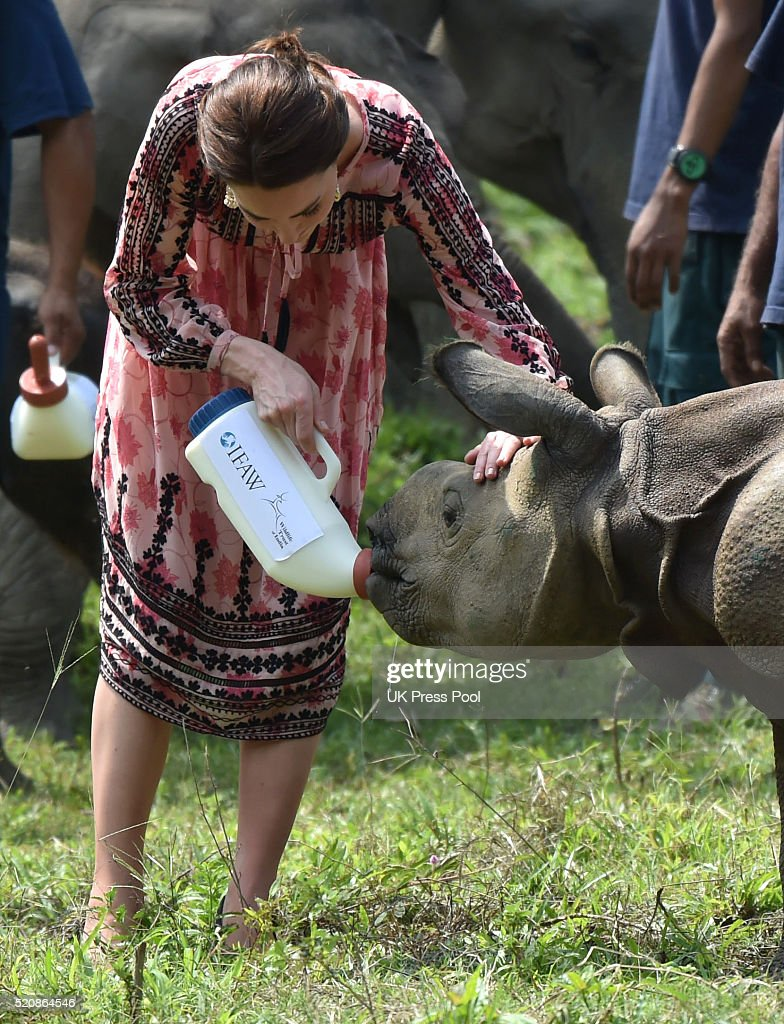 Catherine, Duchess of Cambridge visits the Centre for Wildlife Rehabilitation and Conservation at Kaziranga National Park on April 13, 2016 in Guwahati, India.