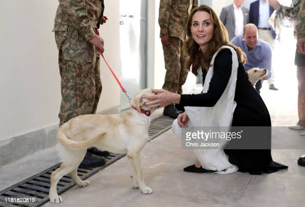 Catherine Duchess of Cambridge with golden labrador puppies Salto and Sky as she visits an Army Canine Centre with Prince William Duke of Cambridge...