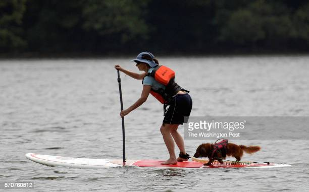 Catherine Frum of Washington Dc takes her dogHomer who is also wearing a life jacket out on a standup paddle board for an afternoon on the Potomac...