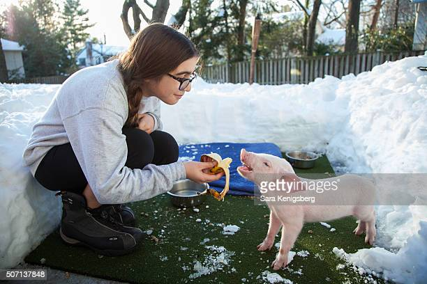 Catherine Smith feeds Wee Wee the piglet January 25 2016 in Chevy Chase Maryland Smith and her family rescued the piglet during winter storm Jonas...