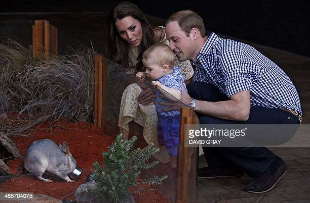 Catherine the Duchess of Cambridge and her husband Britain's Prince William watch as their son Prince George looks at an Australian animal called a...