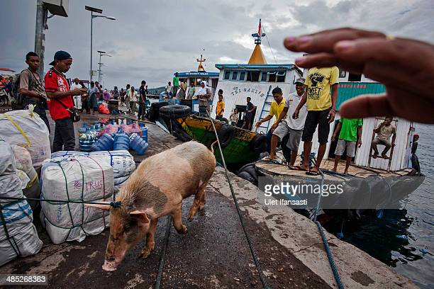 Catholic worshippers carry a pig from a wooden boat on their way to attend Holy Week celebrations, known as 'Semana Santa' on April 17, 2014 in...