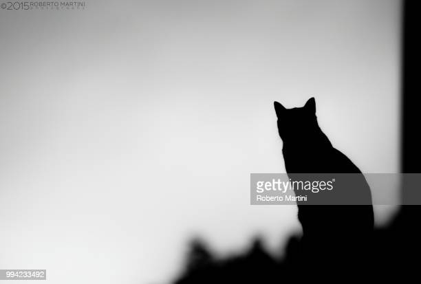 cat-line - black puss stock photos and pictures