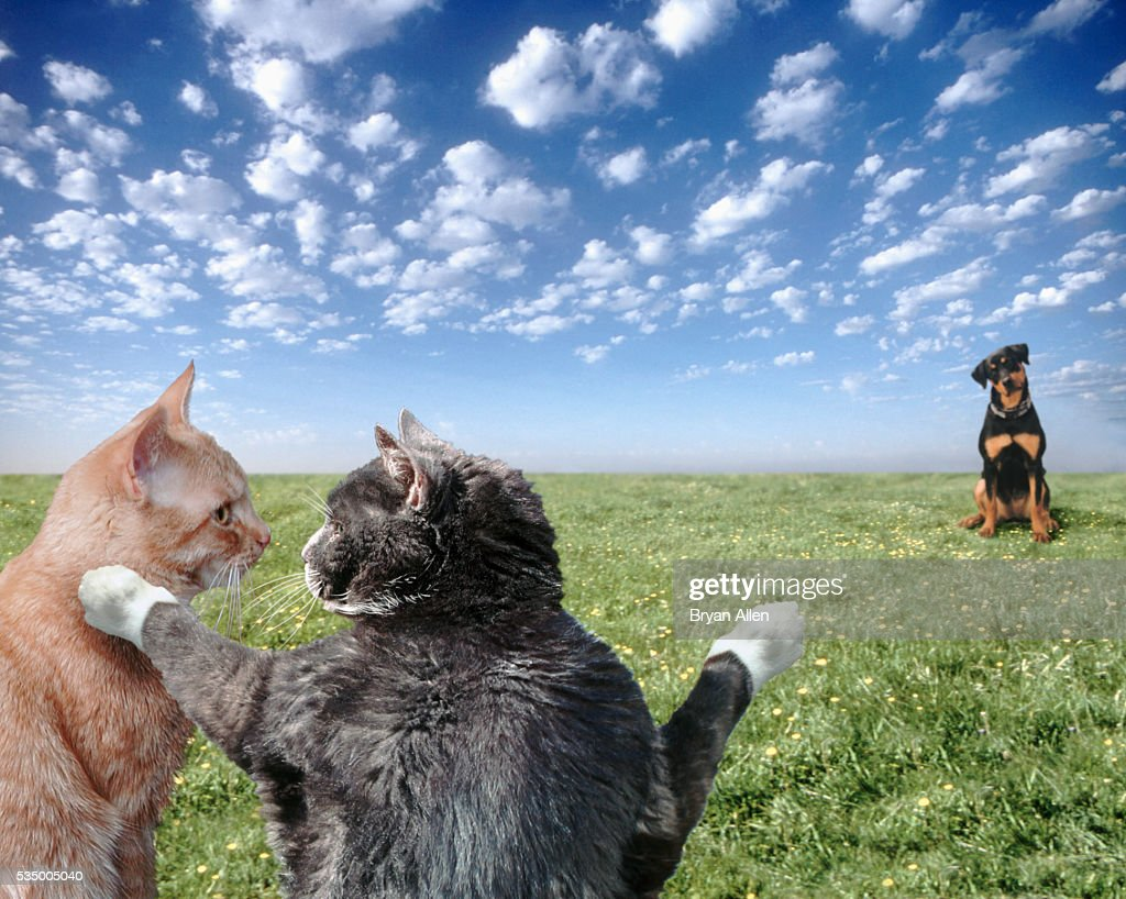 Cats and dogs : Stock Photo
