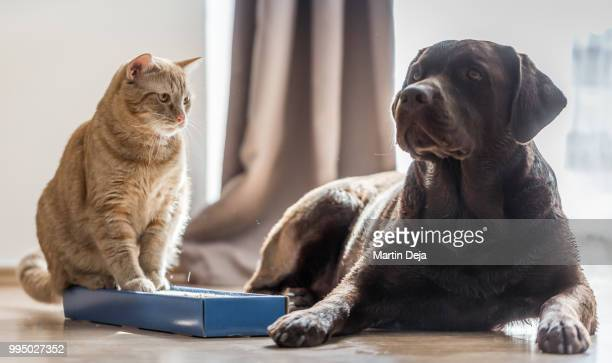 cats and dogs - dog and cat stock photos and pictures