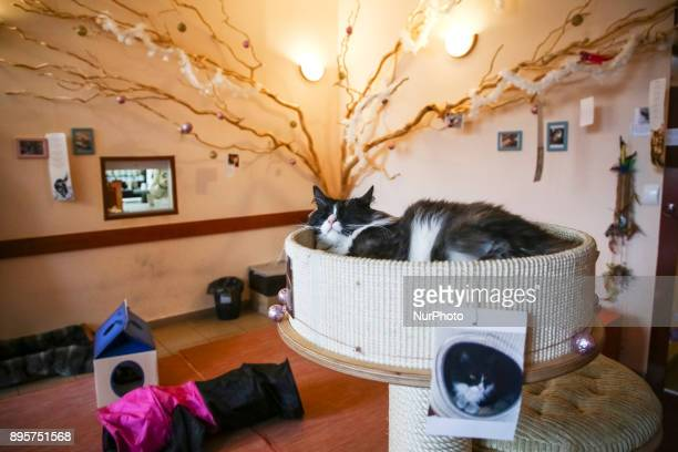 Cats and people sharing time and space at the Cat Cafe 'Kociarnia' situated on Lubicz Street in Krakow, Poland on 19 December, 2017. Cat lovers may...