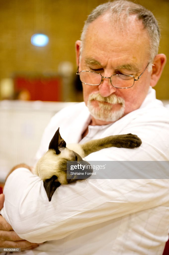 Cats are judged at Merseyside Cat Club Championship show at Sutton Leisure Centre on June 3, 2017 in St Helens, England.