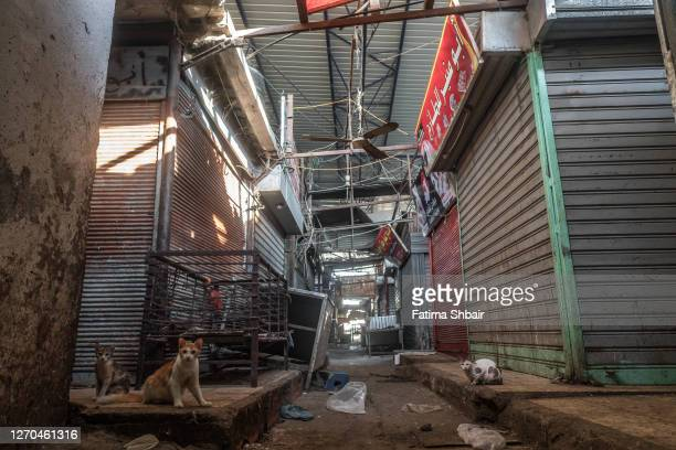 Cats are seen in an empty central market during a coronavirus lockdown in Jabalia Refugee Camp on August 28, 2020 in Gaza City, Gaza. Fears are...