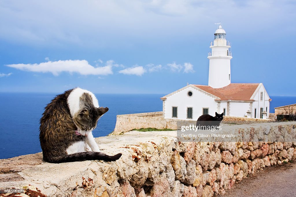 Cats at the Lighthouse : Foto de stock