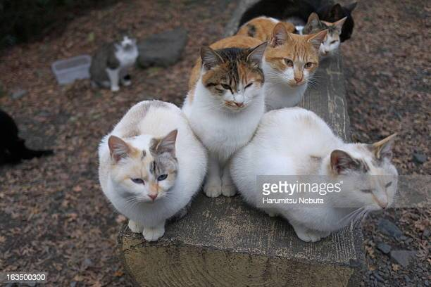 cats ball - medium group of animals stock pictures, royalty-free photos & images