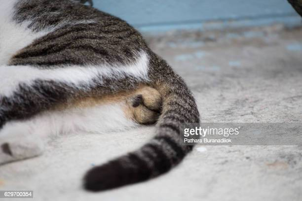 cat's balls - hairy balls stock photos and pictures