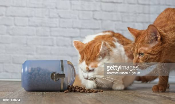 Cats By Food In Container On Hardwood Floor At Home