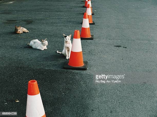 Cats By Traffic Cones On Street