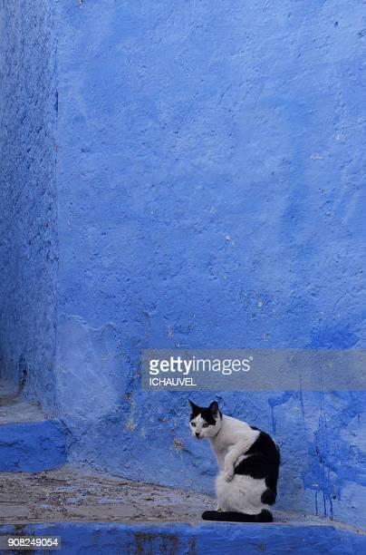 cats chechaouen morocco - novembro azul - fotografias e filmes do acervo