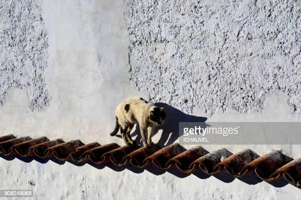 cats chefchaouen morocco - novembro azul - fotografias e filmes do acervo