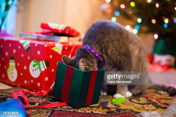 A Cat's Christmas Morning Surprise