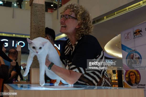 Cats compete at International Cat Show organized by Indonesian Cat Association in Pekanbaru Riau Province Indonesia on February 29 2020