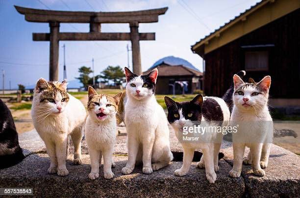 Cats crying for something to eat