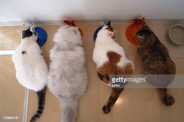 cats eating - quatre animaux photos et images de collection