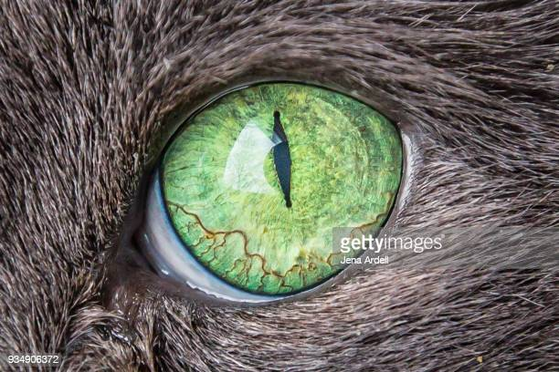 cat's eye closeup green eyes cat - animal eye stock pictures, royalty-free photos & images