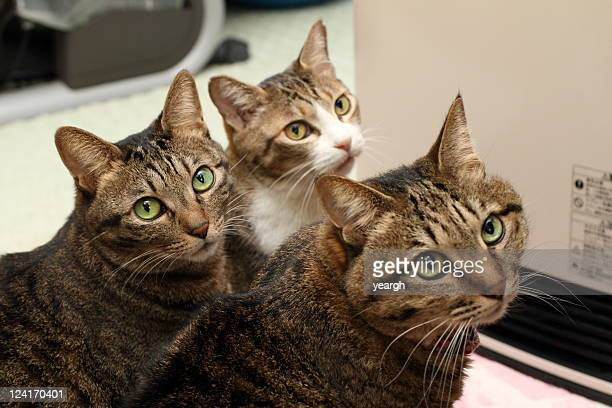 cats eyes - three animals stock pictures, royalty-free photos & images