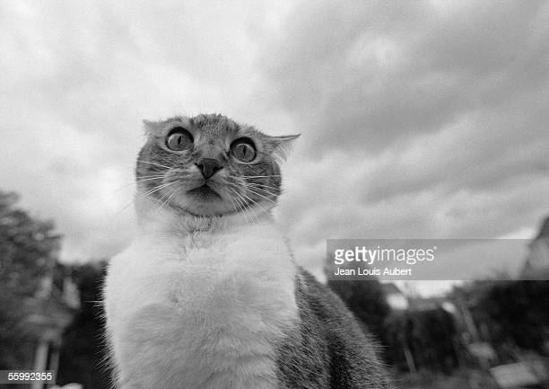 Cat's face, black and white, low angle view