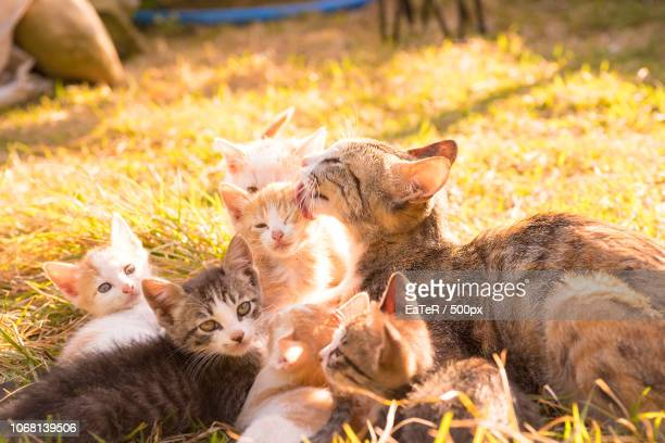 cats family lying on grass - medium group of animals stock pictures, royalty-free photos & images