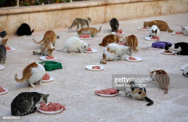 Cats feed on mincemeat at lunchtime on March 17 at Ernesto's Cat Sanctuary run by Mohammed Alaa alJaleel in Kfar Naha an oppositionheld town in...