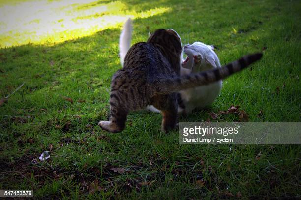 Cats Fighting At Park