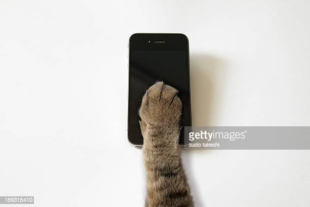 Cat's hand to operate the touch panel.