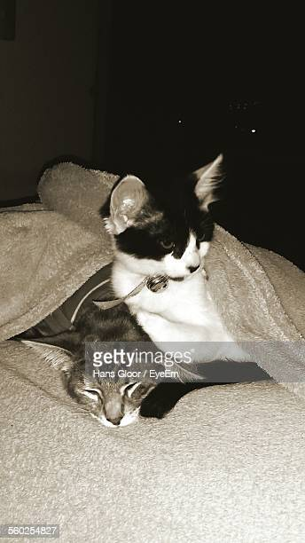 cats hiding under blanket - cat hiding under bed stock pictures, royalty-free photos & images