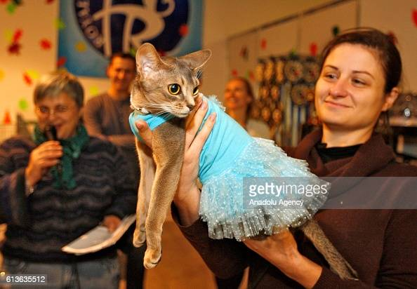 Cats In Costumes Is Seen During Dress Competition For Cats At The News Photo Getty Images