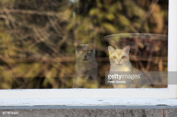 Cats in Reflection