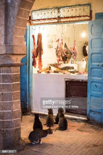 Cats looking at meat in butchers shop, Essaouira, Morocco, Africa