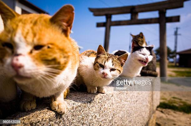 Cats looking at something curiously