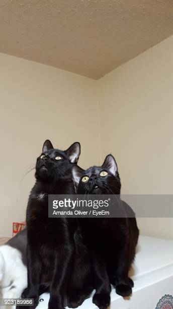 Cats Looking Up While Sitting Against Wall At Home
