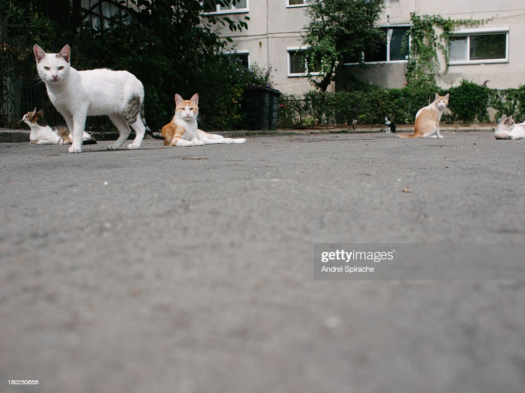 Cats lying on an alley : Stock Photo